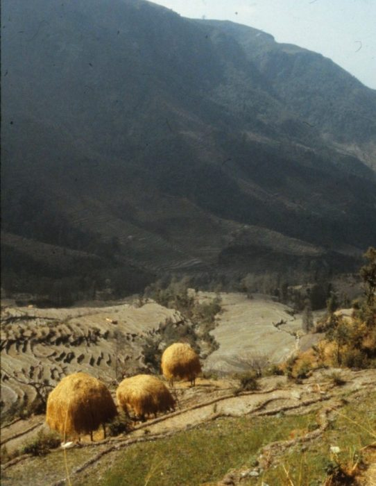 they look like moving haystacks