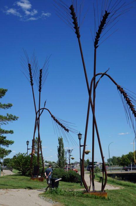 wheat is king in Weyburn