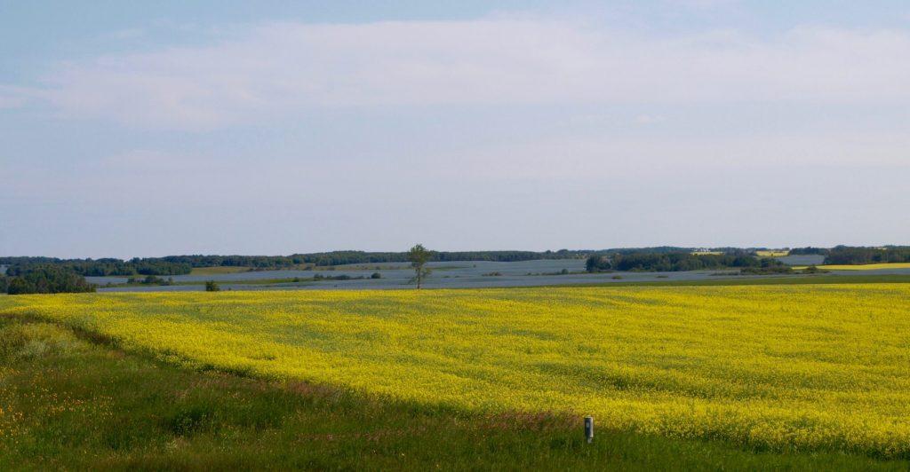 Manitoba fields