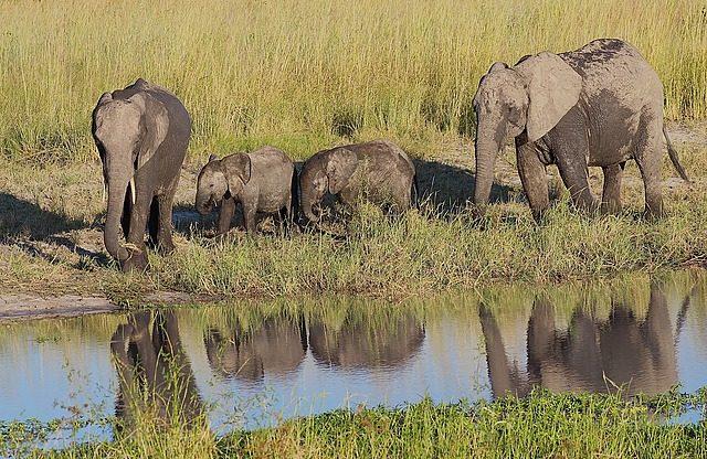 more elephant