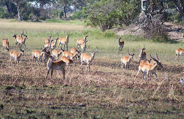 the impala on high alert