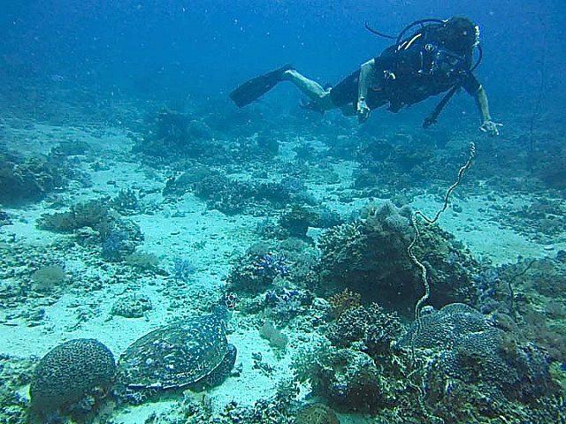 Bev looking at a sea turtle