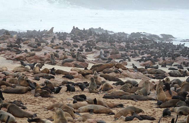so many seals