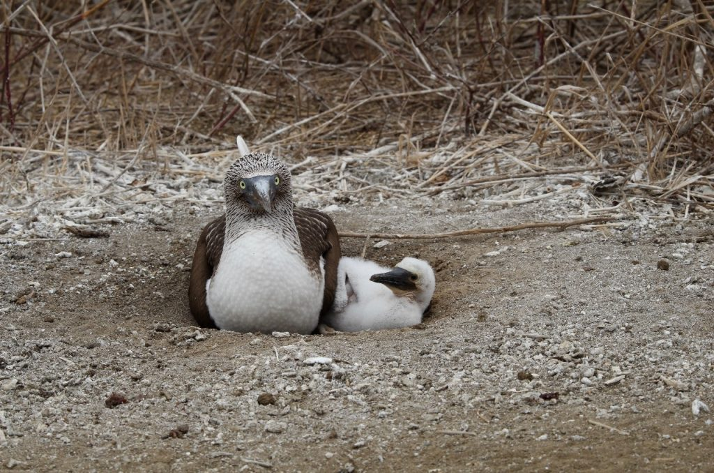 mother and juvenile