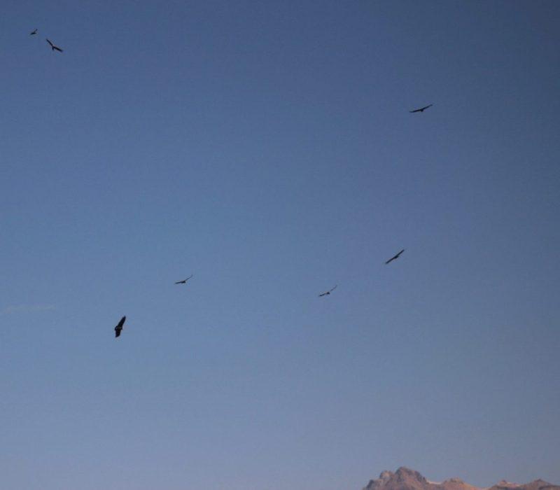 a sky full of condors