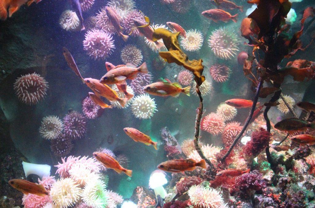 enticement to scuba dive