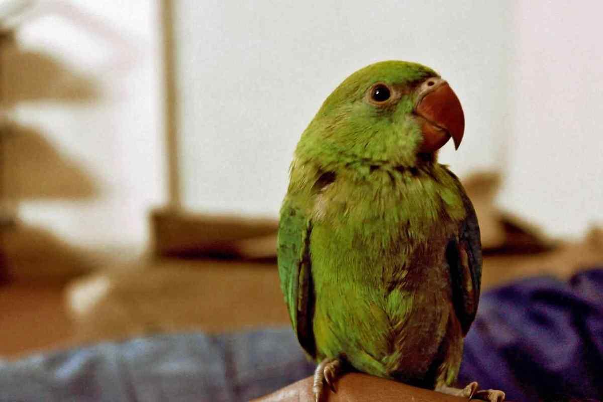 PETS-bird2.jpg?fit=1200%2C800