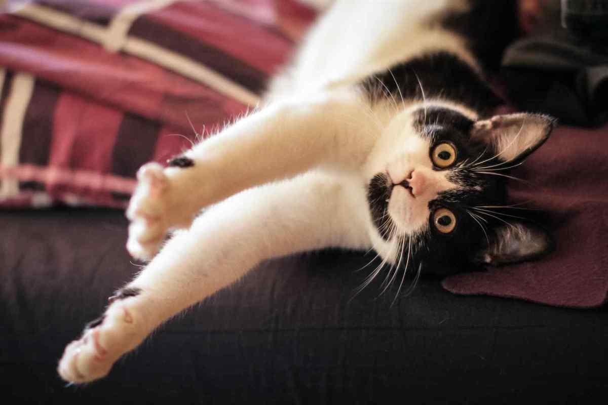 PETS cats4