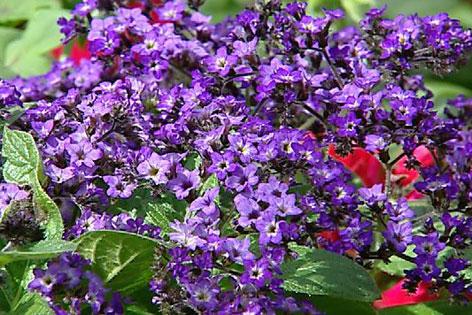 Welche Blumen Im September Pflanzen