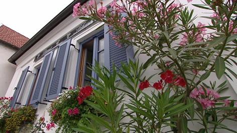 Giftpflanzen In Haus Und Garten Radio Burgenland