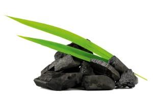 charbon végétal actif