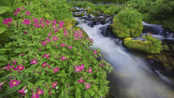 beautiful-view-of-the-river-among-the-flowers-249788