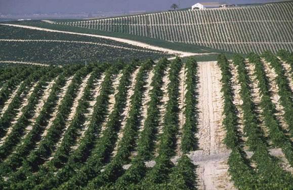 Vinos de Jerez y Montilla Moriles