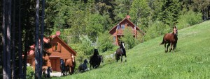 Pferdewiese vor Gästehäusern