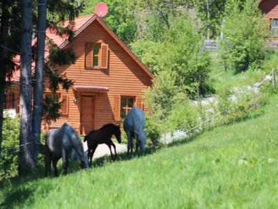 Pferdewiese vor den Ferienhäusern