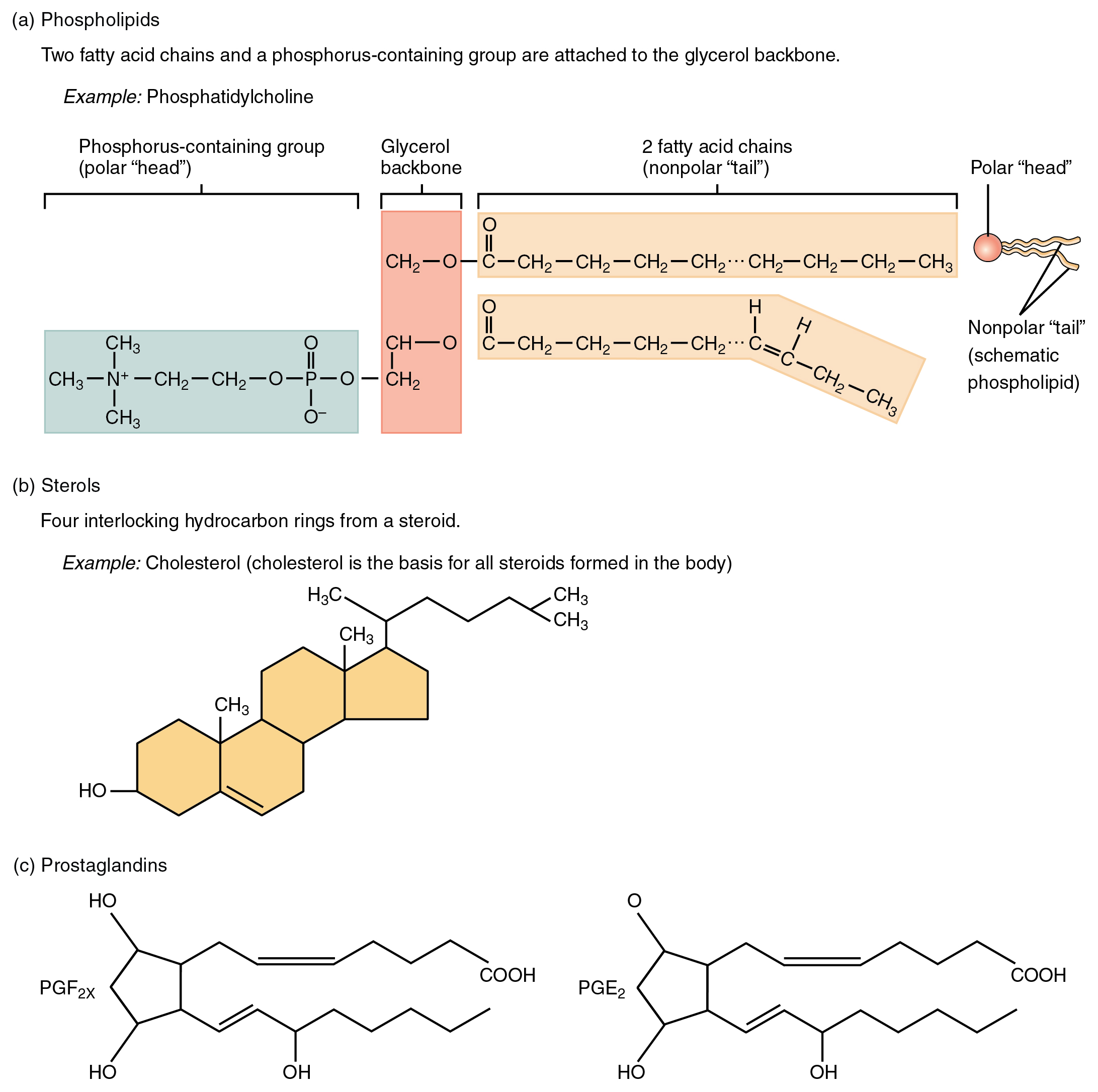 This Figure Shows The Chemical Structure Of Different Lipids