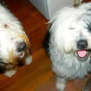 Bentley and his foster brother Boutelle.