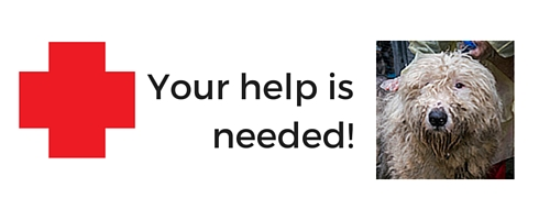 Urgent! Neglect and abuse cases in Texas & BC need your help!