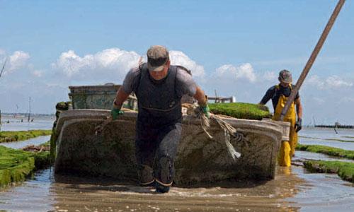 Waar komen onze oesters vandaan?