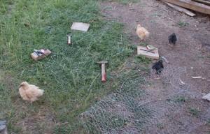 les poussins tournent autour des outils de bricolage