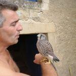 avec Punky, jeune faucon crécerelle recueilli, dans les mains