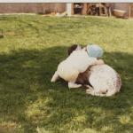 enfant couchée sur un chien