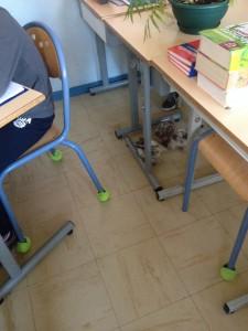 Inspection en groupe de la salle de classe par nos trois poussins !