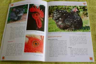 livre La poule pékin d'Antony Ré
