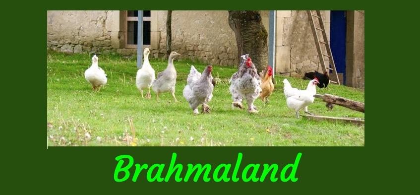 Boutique de Brahmaland