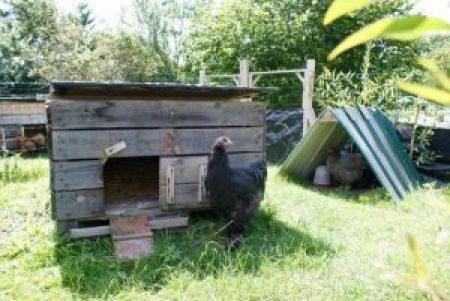 Les abris à grain offrent une double protection aux poules (pluie et soleil).