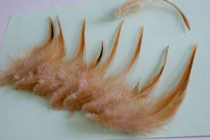 Magnifiques plumes marron et noir de coq vorwerk