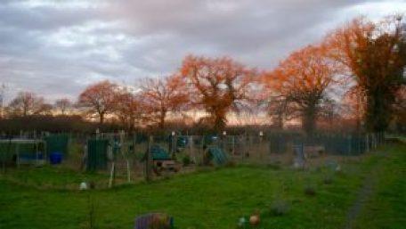 Lever du jour sur le jardin des poules