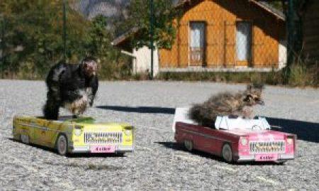 poussins dans une voiturette faisant la course !!