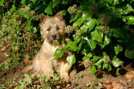 portrait de notre petite chienne au soleil
