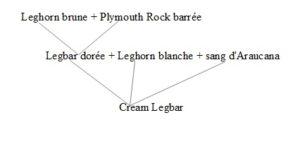 origine Cream Legbar