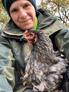 poule grise qui reste sur les genoux pour se faire carresser