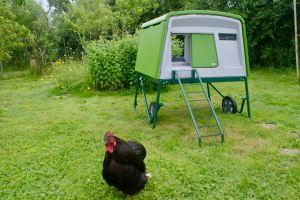 poulailler eglu cube en coloris vert. très harmonieux une fois installé dans le jardin des poussins.
