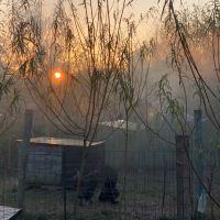 poulaillers dans la brume matinale