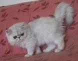Garfield119Tage6