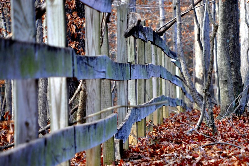 Wooden Fence and Leaves by Barb Ballard (scidmail) on Stock.xchng