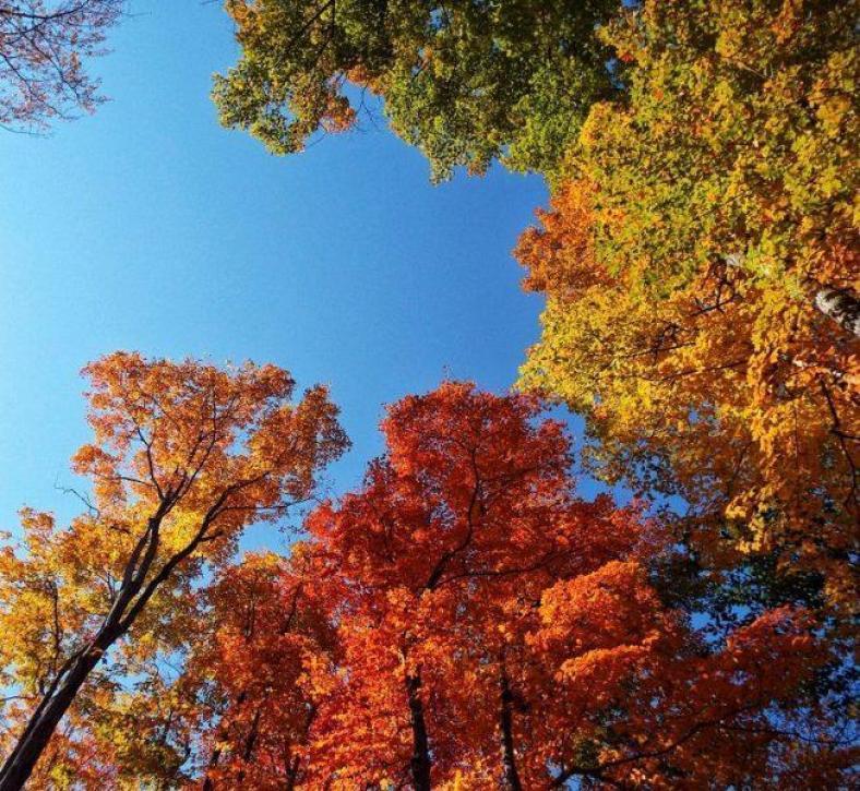killbear-provincial-park-fall-colors-2015-four-colors