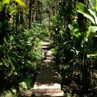 Exploring Maui: From Deserts to Jungles