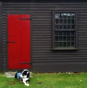 Dog and Door.