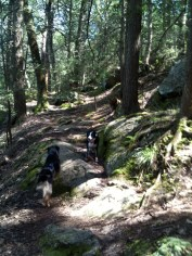 Hank and Serafina confer on approaches to climbing rocks.