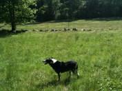 I like fields.