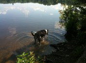 Hank in the lake.