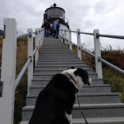 Dogs are not allowed up to the lighthouse.