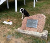 Hank does not appreciate the irony of the celebrated lighthouse dog.