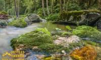 Mariovo - Wild Nature