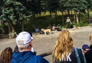 Denali huskies